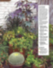 Colorado Homes and Lifestyles, C5280 Home, 5280, container gardening, denver dirty girls, ddg container gardening, tucson, tucson container gardening, campagnia pots, succulents, agaves, gardening, fine gardening, face pot, campagnia pots, campagnia face pots, air plants, fine gardening, a gardener's garden, tucson, tucson gardening, tucson container gardening, fine gardening, one pot two conditons