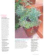Colorado Homes and Lifestyles, C5280 Home, 5280, container gardening, denver dirty girls, ddg container gardening, tucson, tucson container gardening, campagnia pots, succulents, agaves, gardening, fine gardening, face pot, campagnia pots, campagnia face pots, air plants, fine gardening, a gardener's garden, tucson, tucson gardening, tucson container gardening, fine gardening, fire and ice
