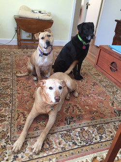 #3 Meet Steffi, Bella and Becca