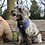 Thumbnail: Thetford Forest | Dog Harness