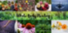 Whole Body Healing Banner.jpg