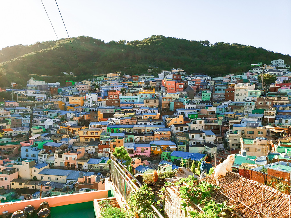 gamcheon culture village colourful homes rooftop