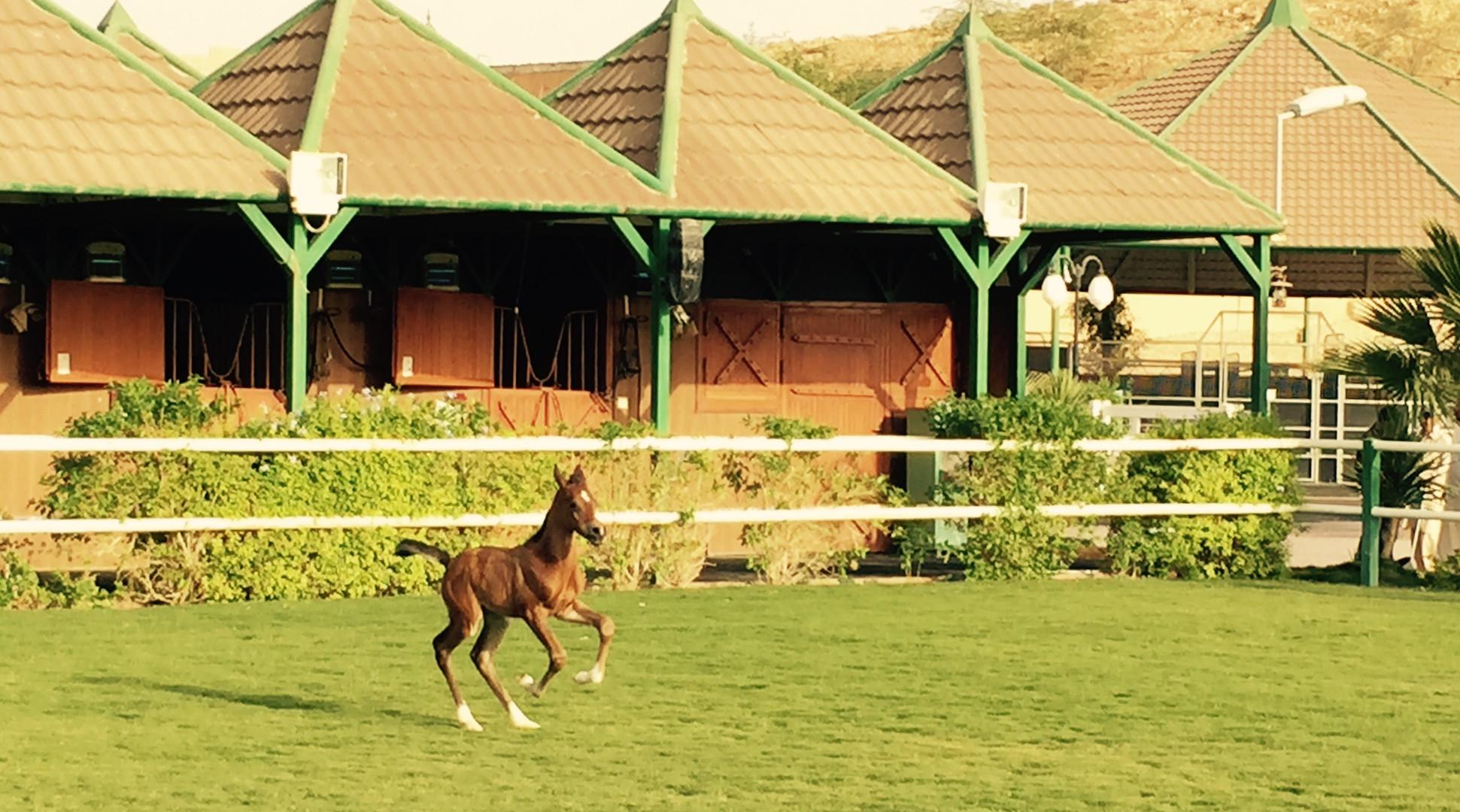 Foal 4.jpg