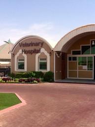 Al Muawd Stud, Riyadh