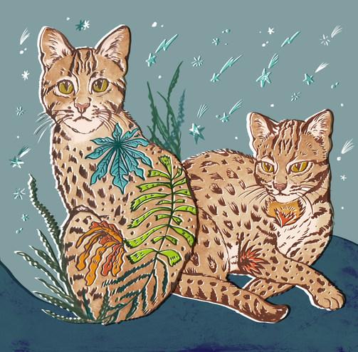 Taiwan Leopard Cat