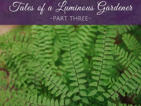 The Tales of a Luminous Gardener - Part 3