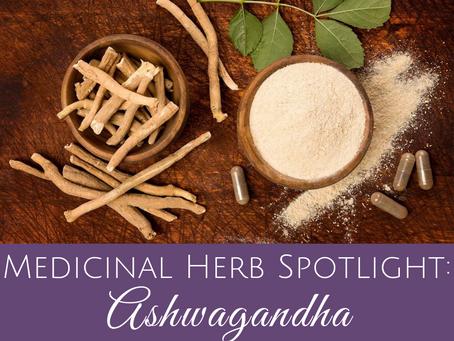 Medicinal Herb Spotlight: Ashwagandha