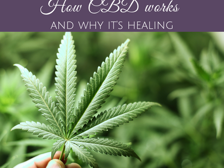How CBD Works and Why it's Healing