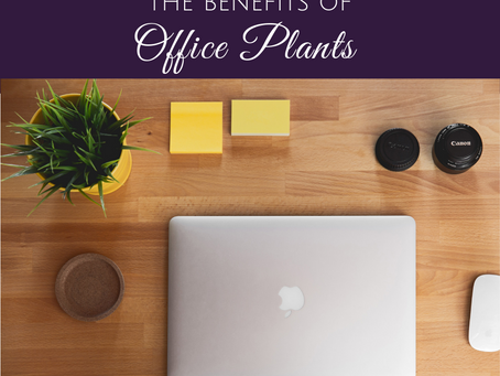 Turn Your Office into an Urban Jungle