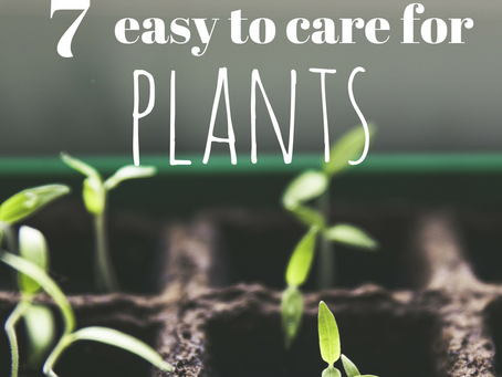 7 Gorgeous and Easy to Care for Houseplants that Every Woman Needs