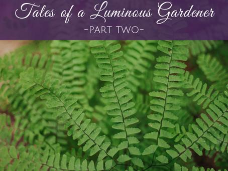 The Tales of a Luminous Gardener - Part 2