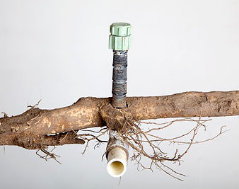 Tree-Root-Killer-and-Unclogging-Pipes-Se