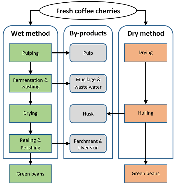 Primary-coffee-processing-pathways-to-pr