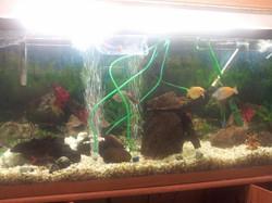 fishtankservice - before.jpg