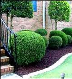 shrub prune.jpg