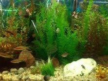 Fish%20tank.jpg