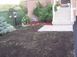 Seeding - after