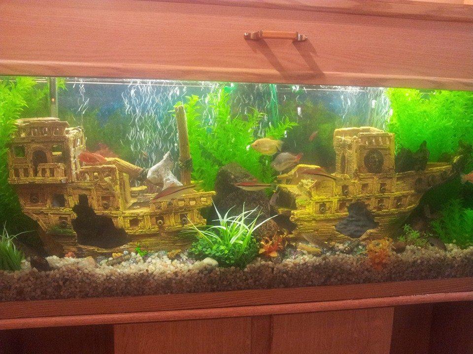 fishtankservice - after.jpg