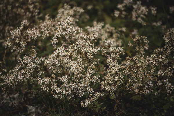 Jess McShane Photography - 20-10 - Doubi