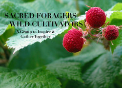 Sacred Foragers Group Banner