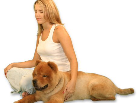 Meditating with your Animal Companions