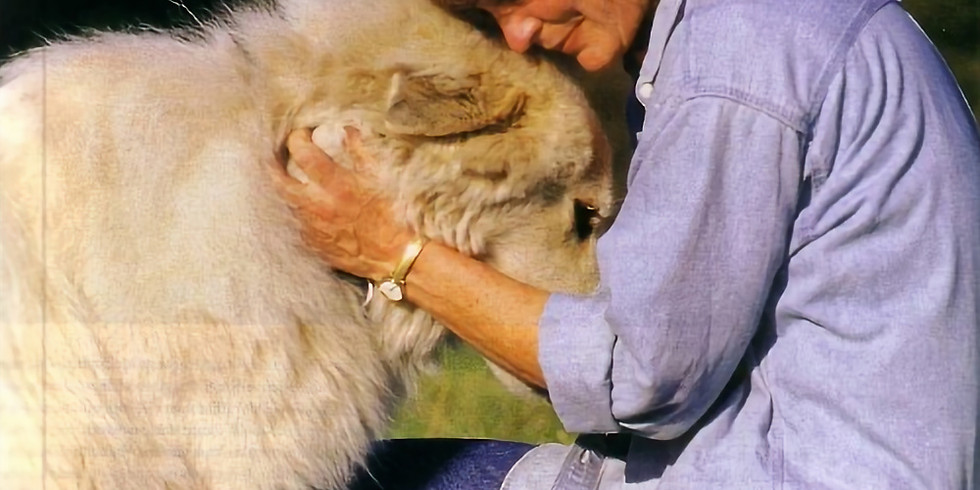 Reiki Level I for Humans and Animals
