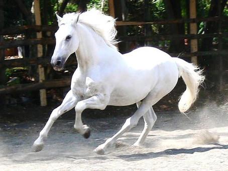 The White Horse | The Dreamweaver