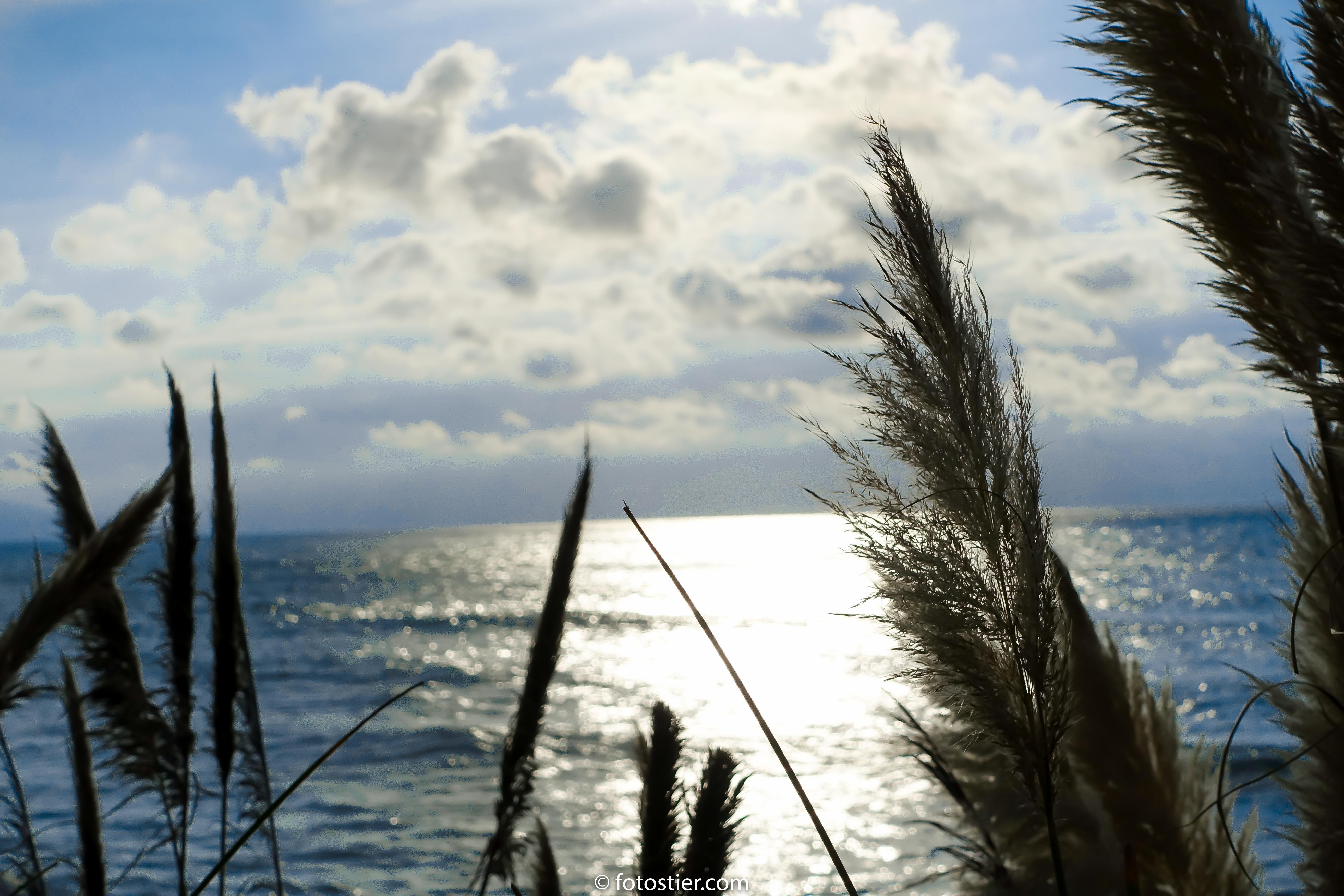Biarritz 1.5