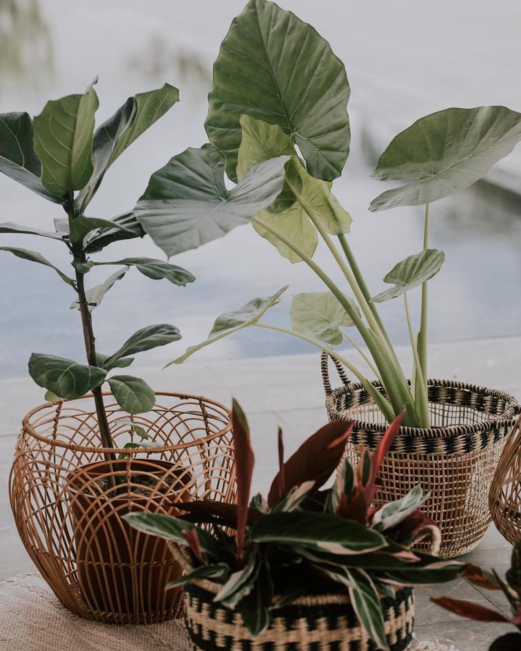 עיצוץ פנים לגינה מוצלת