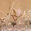 Thumbnail: DRY FLOWERS x BABIES KIT