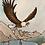 Thumbnail: Eagle ll
