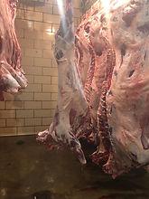 lambcarcass.jpg