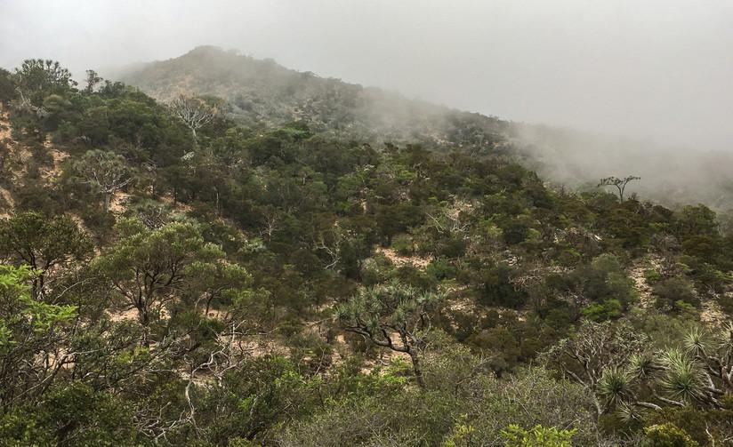Wet Ecosystem