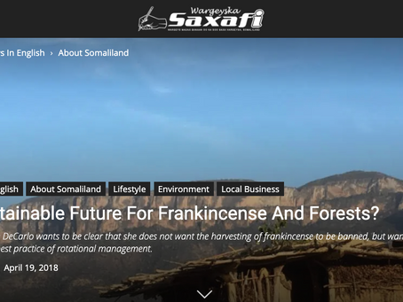 saxafimedia: A Sustainable Future For Frankincense And Forests?