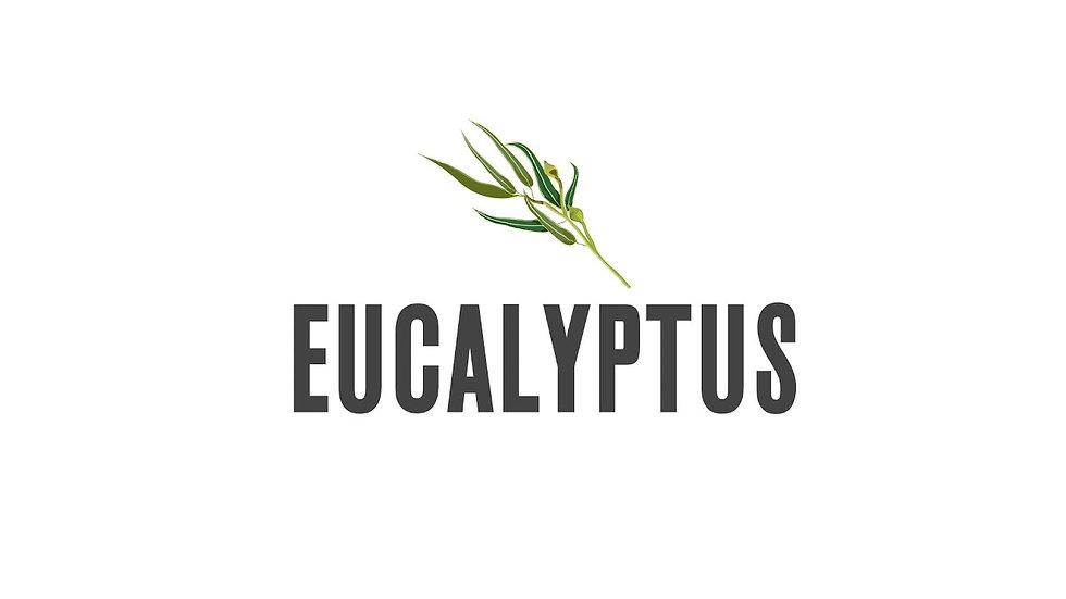 Eucalyptus Essential Oil icon