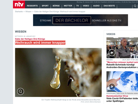 German NTV: Frankincense is becoming increasingly scarce