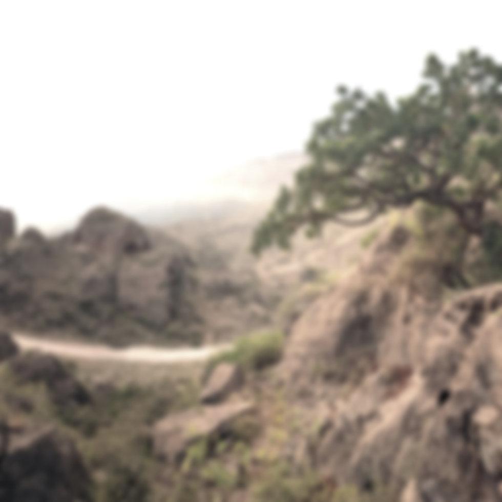 Somaliland Frankincense Sustainability