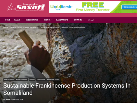 saxafimedia: Sustainable Frankincense Production Systems In Somaliland