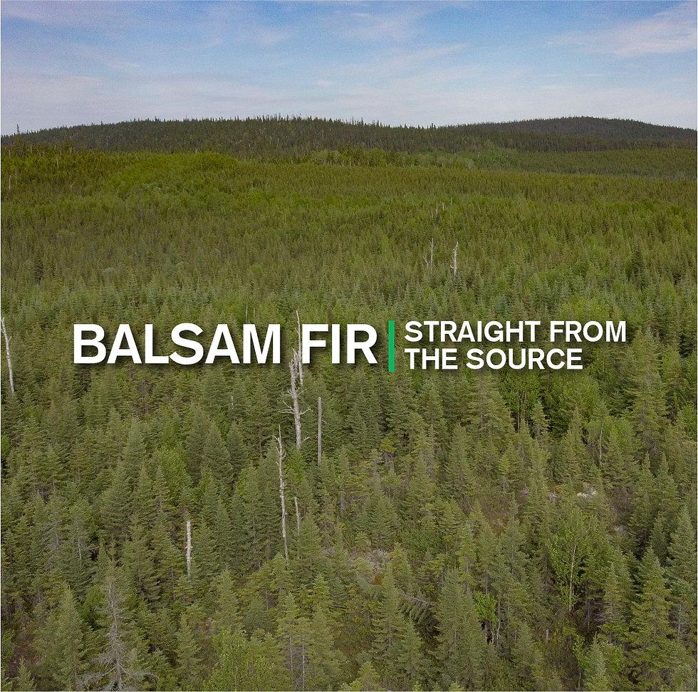 Balsam fir forest