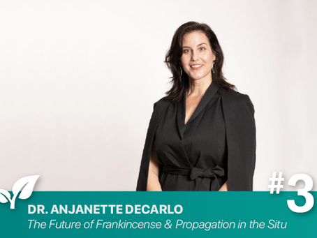 #3 Future of frankincense, in Situ Propagation By Anjanette DeCarlo PhD
