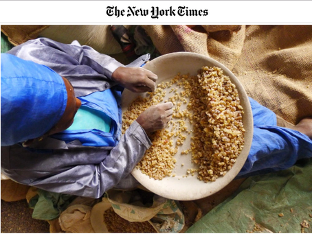 New York Times: Could This be the End of Frankincense?