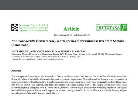 Boswellia occulta (Burseraceae), a new species of frankincense tree from Somalia