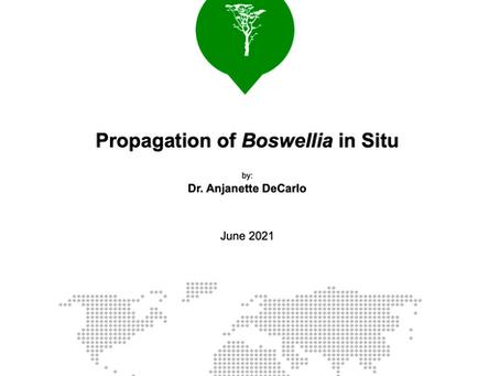 Propagation of Boswellia in Situ [Report]