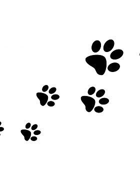 paw-prints.jpg
