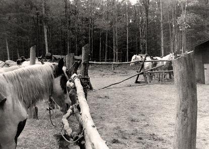 early1970campers-2.jpg