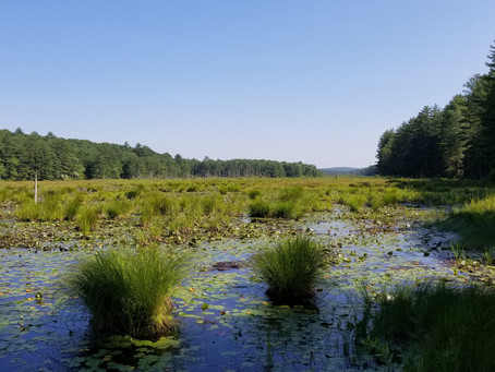 The Wetlands...