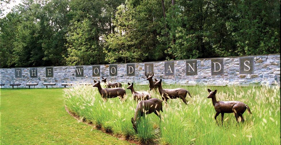 Woodlands3.jpeg