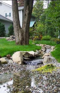 Renewal Day:30 - Backyard Meanderings