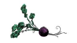 radis noir symbole
