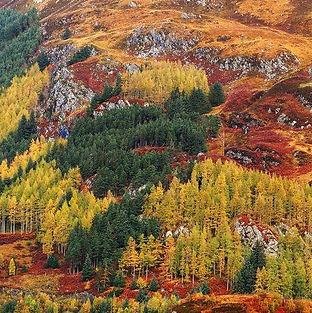 Autumn_edited.jpg